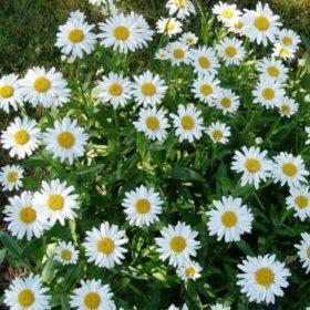 (5.9-Qt) Color Pot Premium Pot - Northeast Gardening
