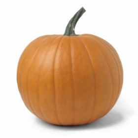Pumpkin (1 ct.)