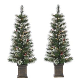 4' Potted Loveland Spruce with 50 Clear White Lights (Set of 2)