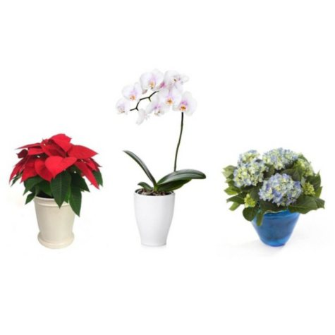 Holiday Plant Subscription