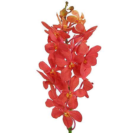 Orchids, Mokara Red (60 stems)