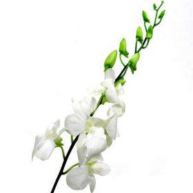 Orchids, Dendrobium White (70 stems)