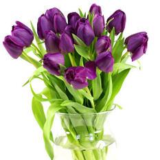 Tulips, Purple (100 stems)