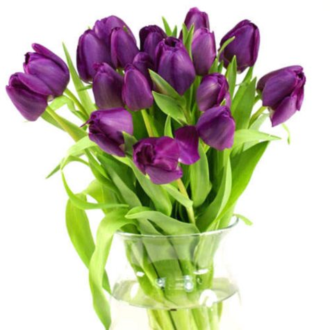 Tulips, Purple (100 stems)