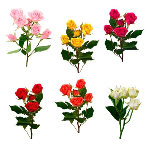 Spray Roses, Assorted Colors (choose 60 or 120 stems)