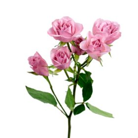 Spray Roses, Light Pink (choose 60 or 120 stems)