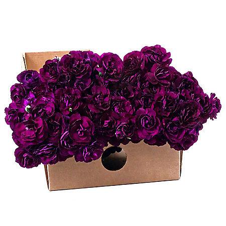Florigene Mini Carnations, Moonvelvet (200 stems)