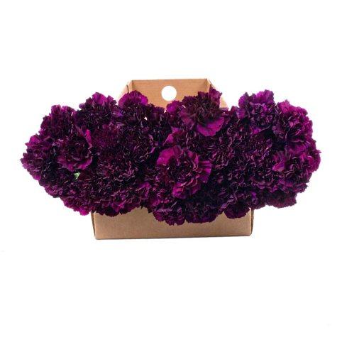 """Florigene"" Moonvista Carnations - 140 Stems"