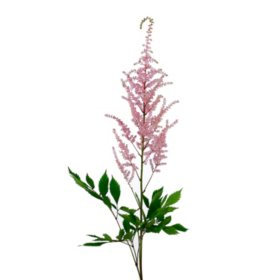Astilbe Flowers, Pink (100 stems)