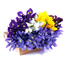 Iris, Assorted Colors (100 stems)