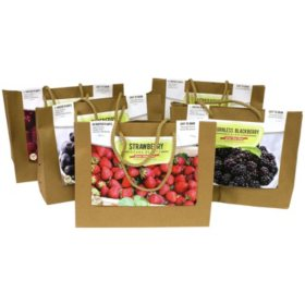 Assorted Edible Fruit & Vegetables