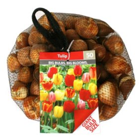 Tulip Mix - Package of 50 Dormant Bulbs
