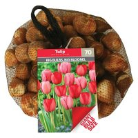 Tulip Impression Blend - Package of 60 Dormant Bulbs