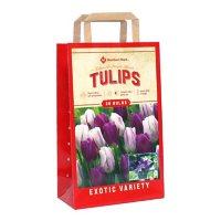 Tulip Color Me Purple - Package of 36 Dormant Bulbs