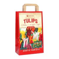 Tulip Lily Flowering Mix - Package of 36 Dormant Bulbs