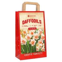 Daffodil Replete - Package of 36 Dormant Bulbs