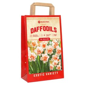 Daffodil Replete - Package of 40 Dormant Bulbs