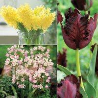 Tulip/Hyacinth/Allium - Package of 40 Dormant Bulbs