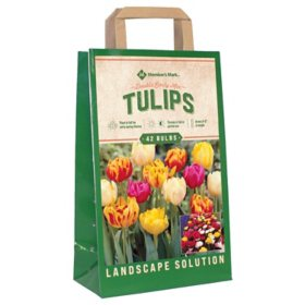 Tulip Double Early Mix - Package of 45 Dormant Bulbs