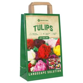 Tulip Double Late Mix - Package of 45 Dormant Bulbs