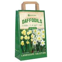 Daffodil Ice Follies and Yellow Cheerfulness - Package of 45 Dormant Bulbs