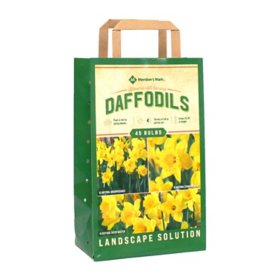 Daffodil Collection - Package of 45 Dormant Bulbs