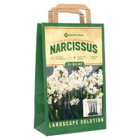 Narcissus Paperwhite - Package of 24 Dormant Bulbs