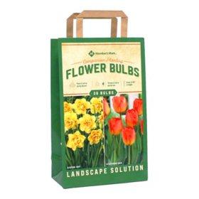 Daffodil/Tulip Companion Planting