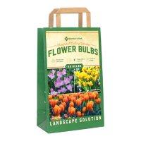 Fragrant Cutting Garden - Package of 48 Dormant Bulbs