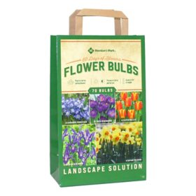 60 Days of Blooms Collection - Package of 75 Dormant Bulbs