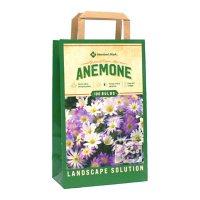 Anemone Blanda Mix - Package of 100 Dormant Bulbs