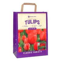 Tulip Red Impression - Package of 48 Dormant Bulbs