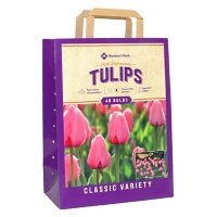 Tulip Pink Impression - Package of 48 Dormant Bulbs