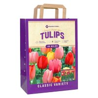 Tulip Pastel Mix - Package of 45 Dormant Bulbs
