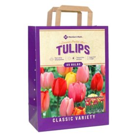 Tulip Pastel Mix - Package of 50 Dormant Bulbs