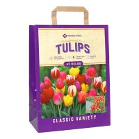 Tulip Long-Stemmed Mix - Package of 45 Dormant Bulbs