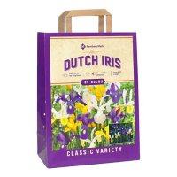 Dutch Iris Mix - Package of 85 Dormant Bulbs