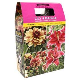 Lilium/Dahlia