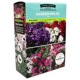 Garden Phlox Mix