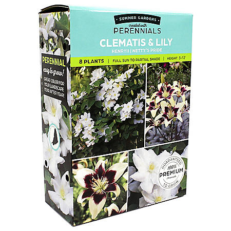Clematis/Lillium Flowers Pack of 10 Bulbs