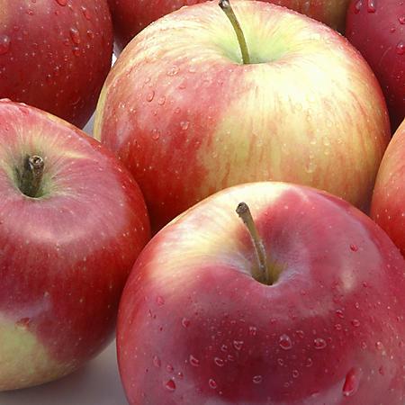 McIntosh Apples (5 lbs.)
