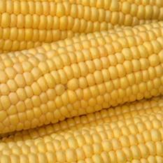 Flav-R-Pac Super Sweet Corn (3 in. ears, 8 pk.)