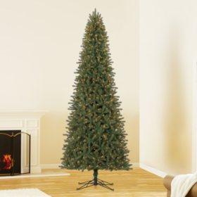 12 ft Member's Mark Artificial Pre-Lit Ellsworth Fir Christmas Tree ...