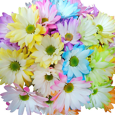 Pastel Pom Bunch, 12 stems (variety and colors may vary)