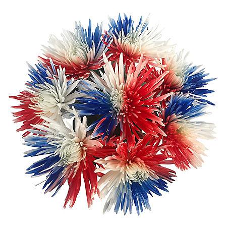 Patriotic Hand-Painted Spider Mums (60 Stems)