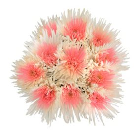 Innie/Outtie Disbuds - Pink and White - 60 Stems