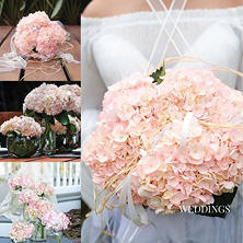 Elite Hydrangeas - Engagement Pink - 15 Stems