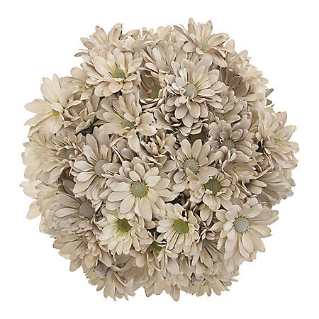 Pompon Painted Sand (60 Stems)