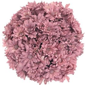 Pompon Painted Mauve (60 Stems)