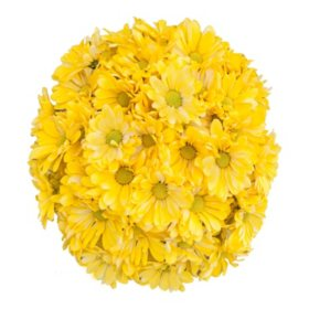 Pompon Painted Freesia (60 Stems)